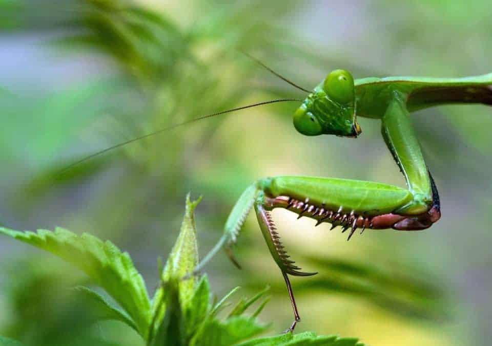 bug-hunt-4