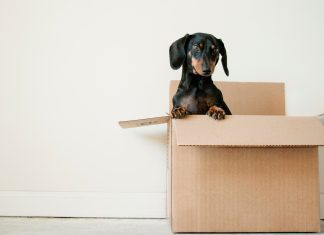 5 Things You Didn't Know You Needed To Rock A Diy Move