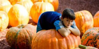 How To Handle Fall Activities Like A Boss