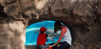 Seaworld: An Orlando Theme Park For All Ages