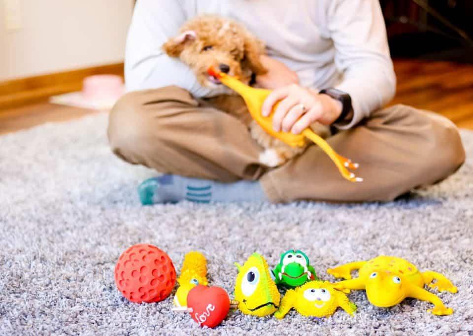 daily mom parent portal lucas b dog toys family gift ideas