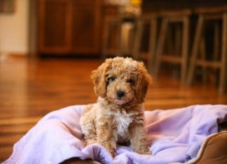 Puppy Checklist: 3 Essentials For Bringing Your New Dog Home