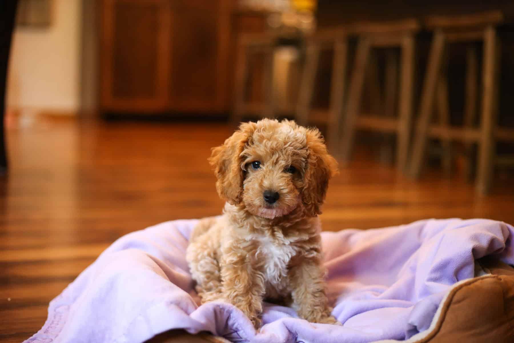 Puppy Checklist: 3 Essentials For Bringing Your New Dog Home