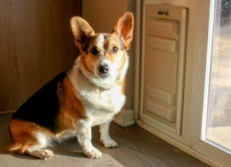 3 Ways Pet Parents Can Get More Done