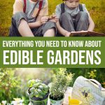 Everything You Need to Know About Edible Gardens 1 Daily Mom Parents Portal