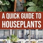 A Quick Guide to Houseplants 1 Daily Mom Parents Portal