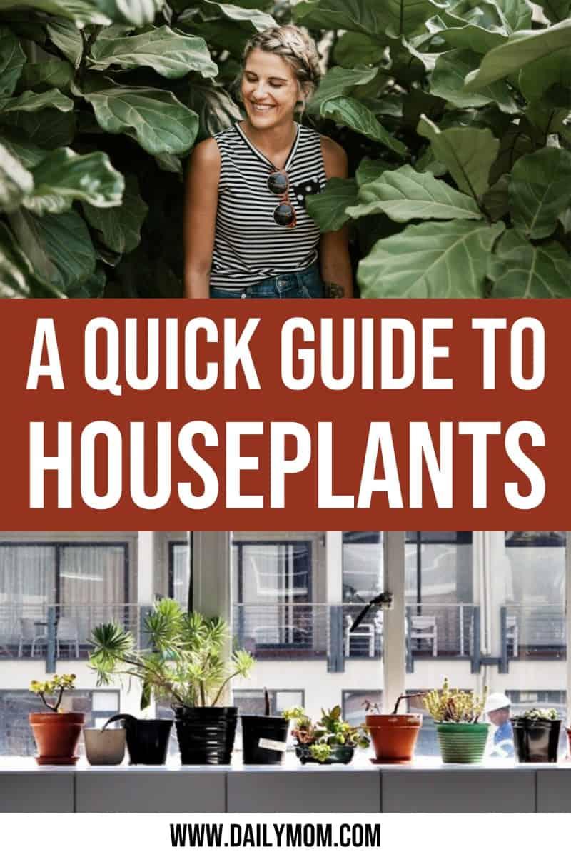 daily mom parent portal houseplant guide