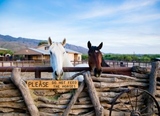 Tanque Verde Guest Ranch: The Best Dude Ranch For Multi-generational Travel
