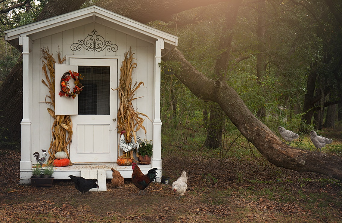 Stylish Chicken Coops For Backyard Chickens Read Now