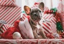 20 Gifts For A Pet Lover