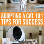 Adopting A Cat 101: Tips For Success
