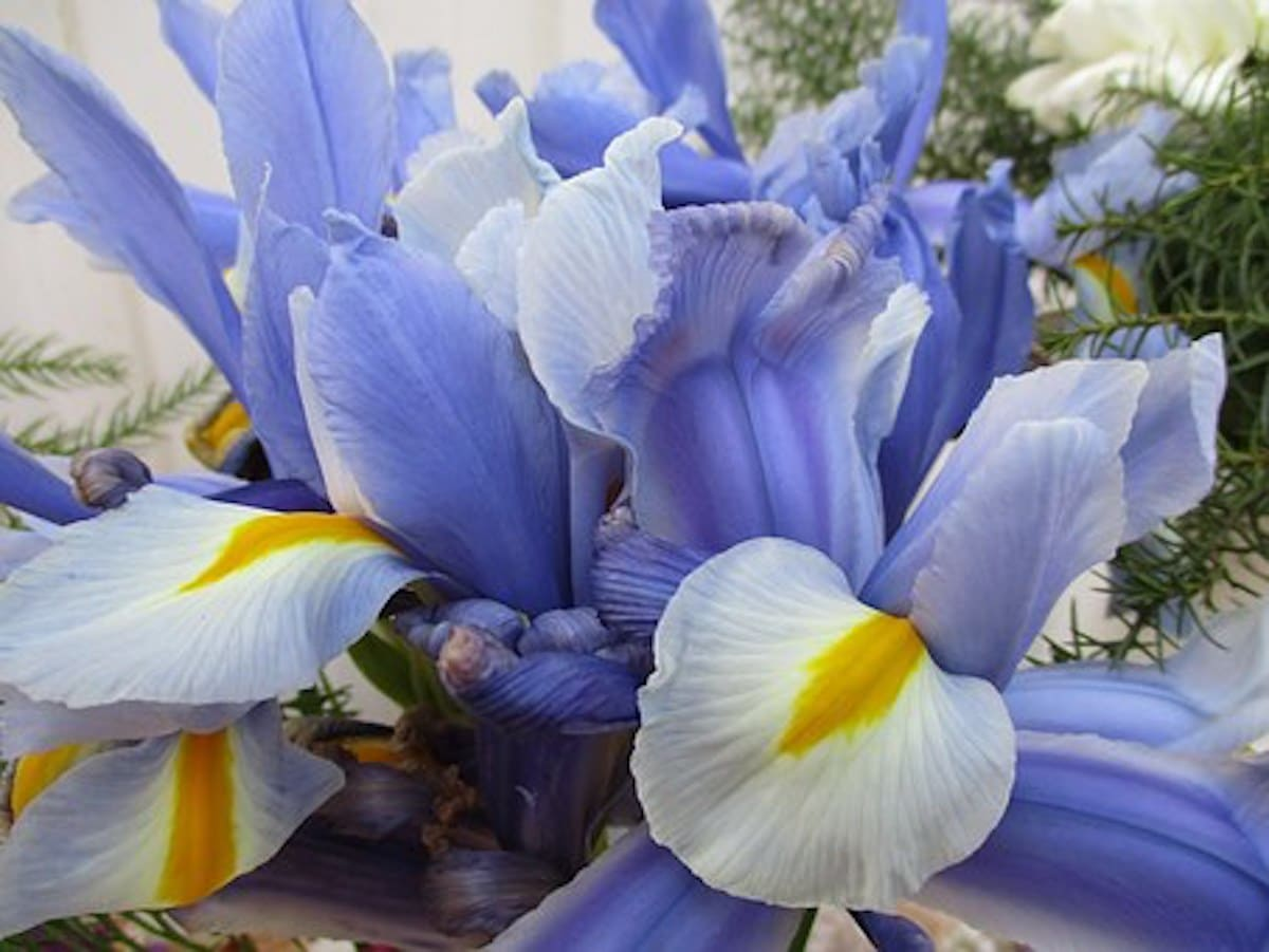 The Best Flowers For Mother's Day: What To Send And Why