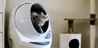 Adopting A Cat 101: Tips For Success