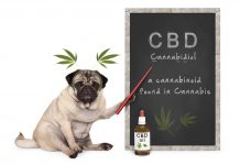 daily-mom-parent-portal-Why You Should Use Cbd Oil For Dogs