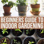 6 Helpful Tips To Get You Indoor Gardening