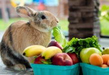 daily-mom-parent-portal-Rabbit As A Pet: 7 Great Reasons You Should Own One