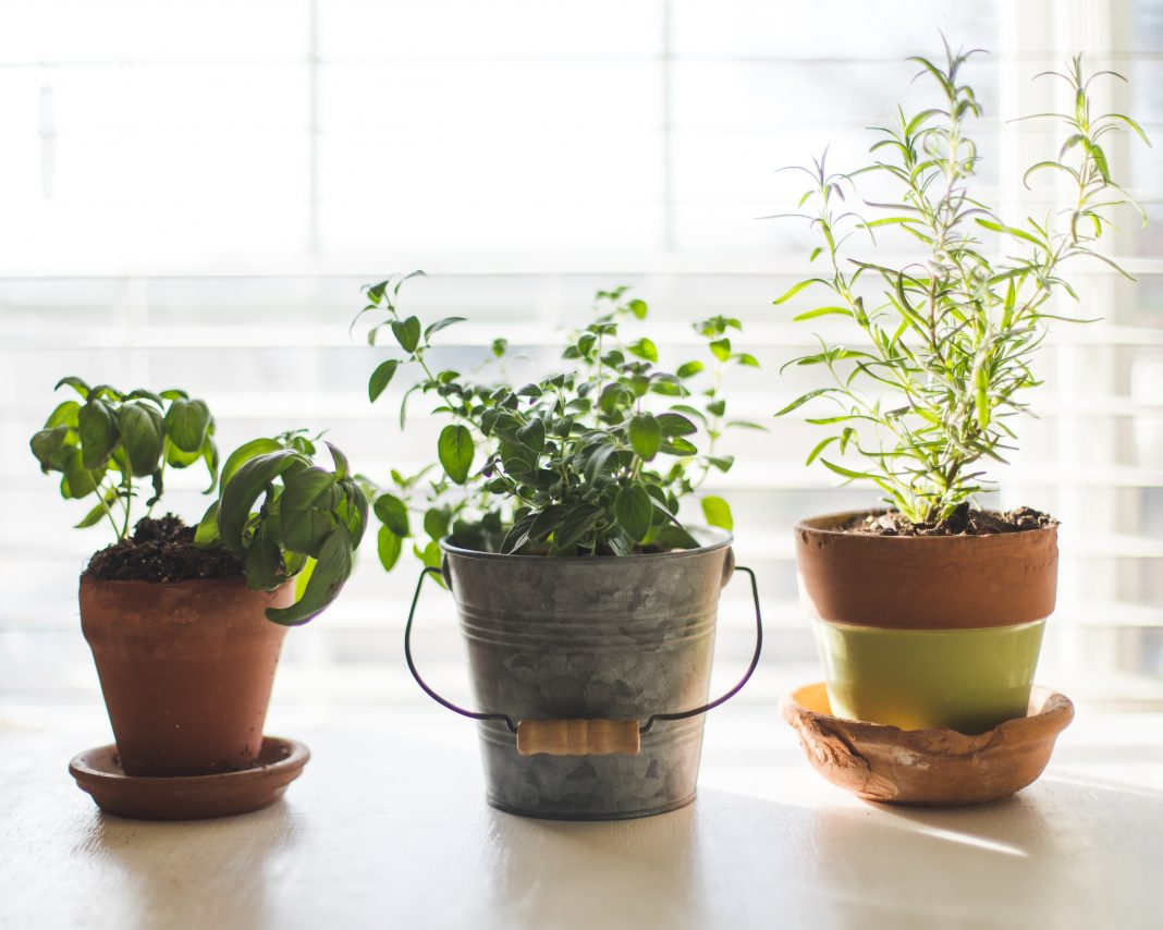 A Beginners Guide To Indoor Gardening
