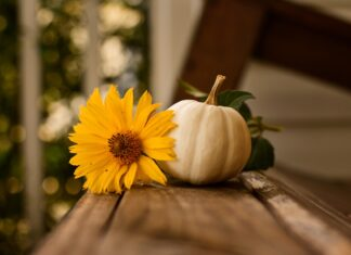 How To: Decorate For Thanksgiving With Intention And Simplicity