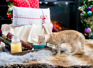 17 Holiday Gifts For Pet Lovers That Are 4 Paws Approved