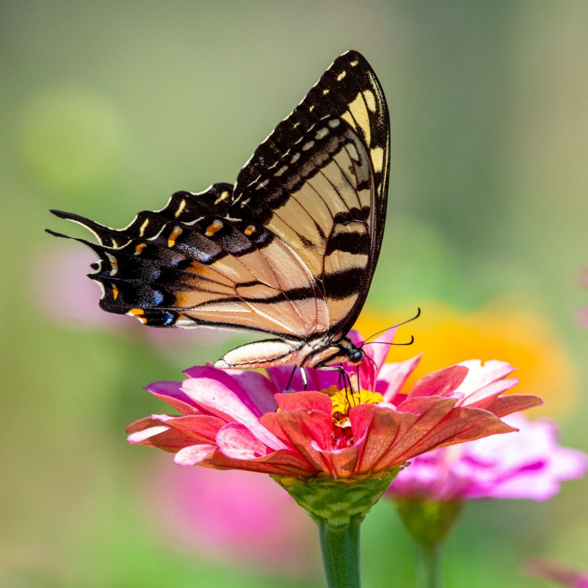 Daily Mom Parent Portal Butterflies